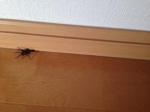 新居に大きな蜘蛛! これって当たり前?(虫嫌いの人はNG): 夢のマイ ...
